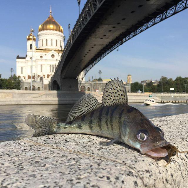 картинки рыбы на средней волге квартиры побыстрей