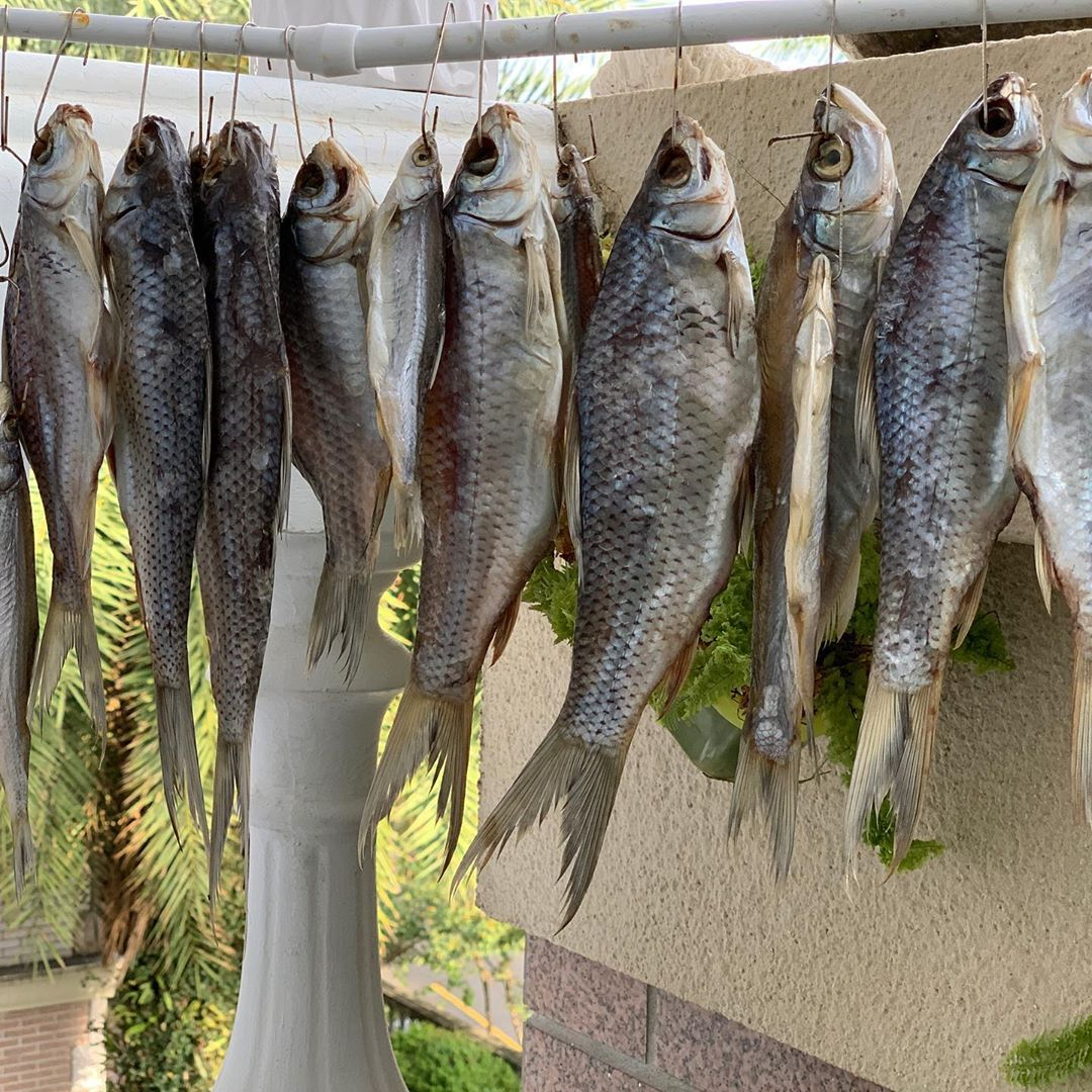 Вяленая рыба с последнего видео. Уже почти готова. Dry fish caught in latest video. Almost ready.