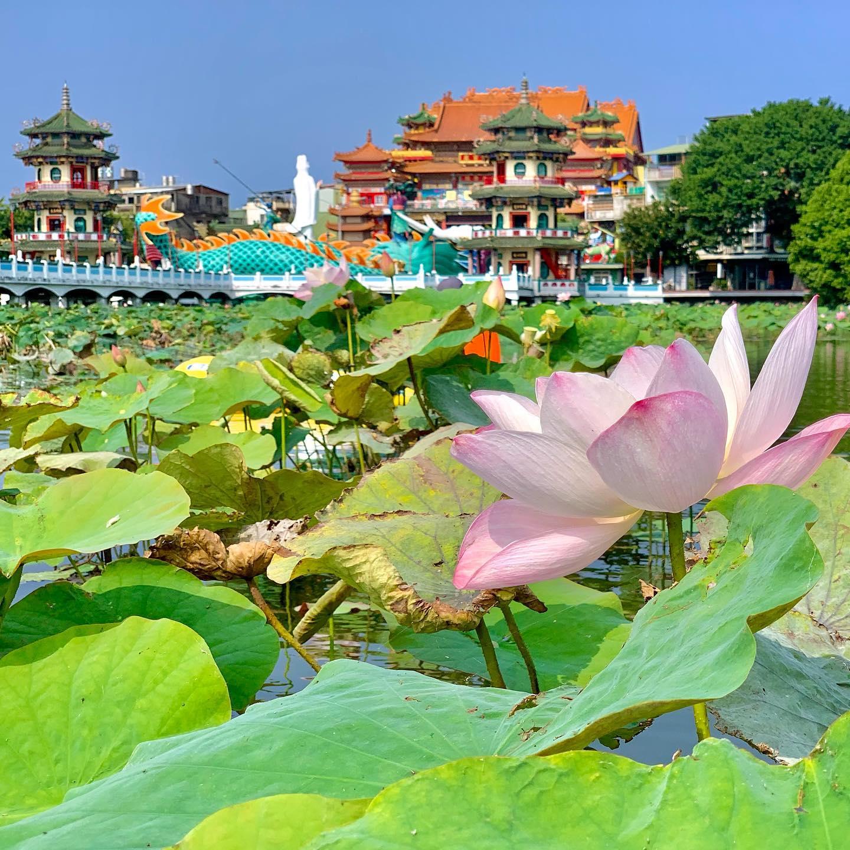 Кайф! Половить в лотосах! Не дикое место, конечно, но со своим колоритом. Fishing in lotuses! Not the wild place but still with flavor.